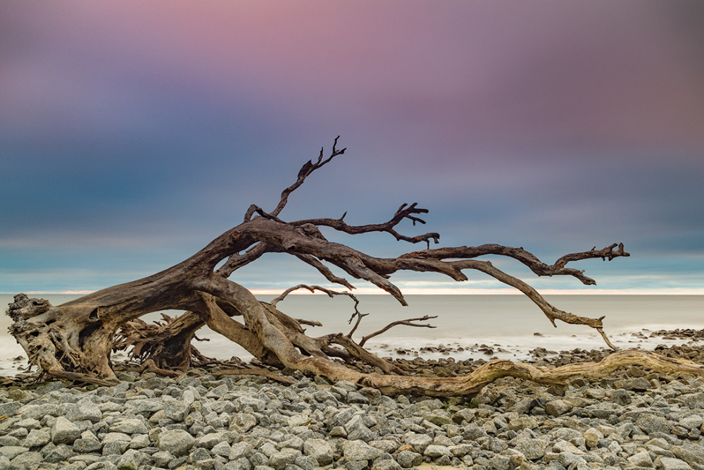 Driftwood, Jekyll Island, GA