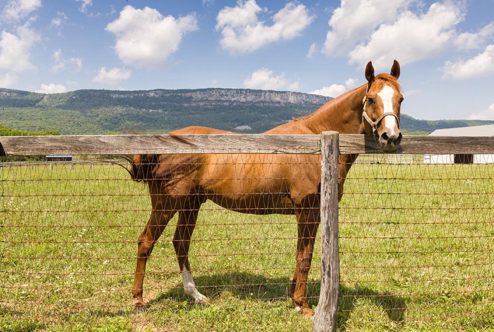 Horse with Shawangunk Ridge behind