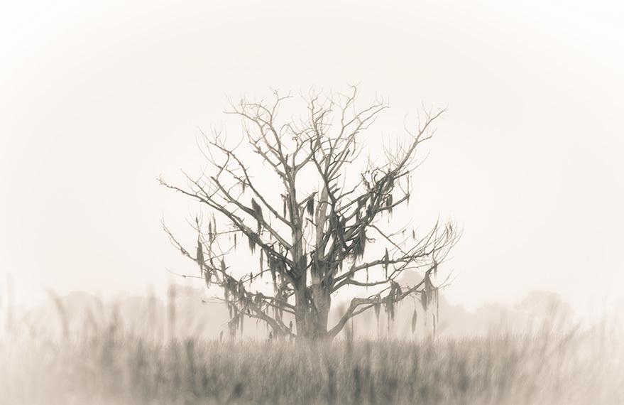 Swamp Tree,Martin County, Florida