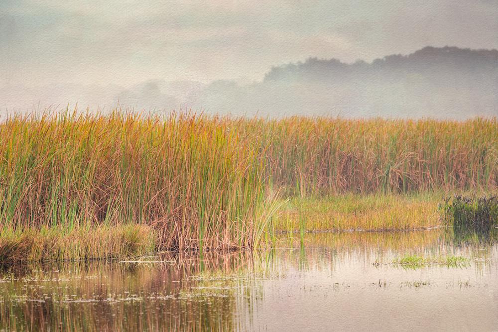 marshland,florida