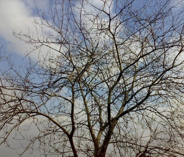 درخت با پس زمینه اسمان