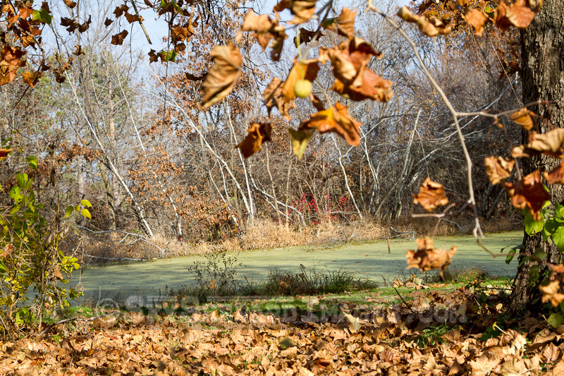 Fall Colors on Duckweed Pond