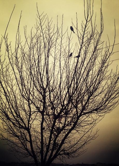Sparrows <3