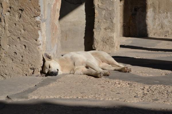 Pompeian dog