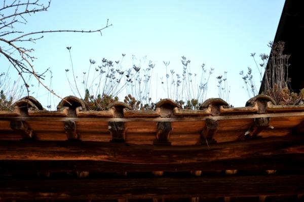 Roof gardening in Rome