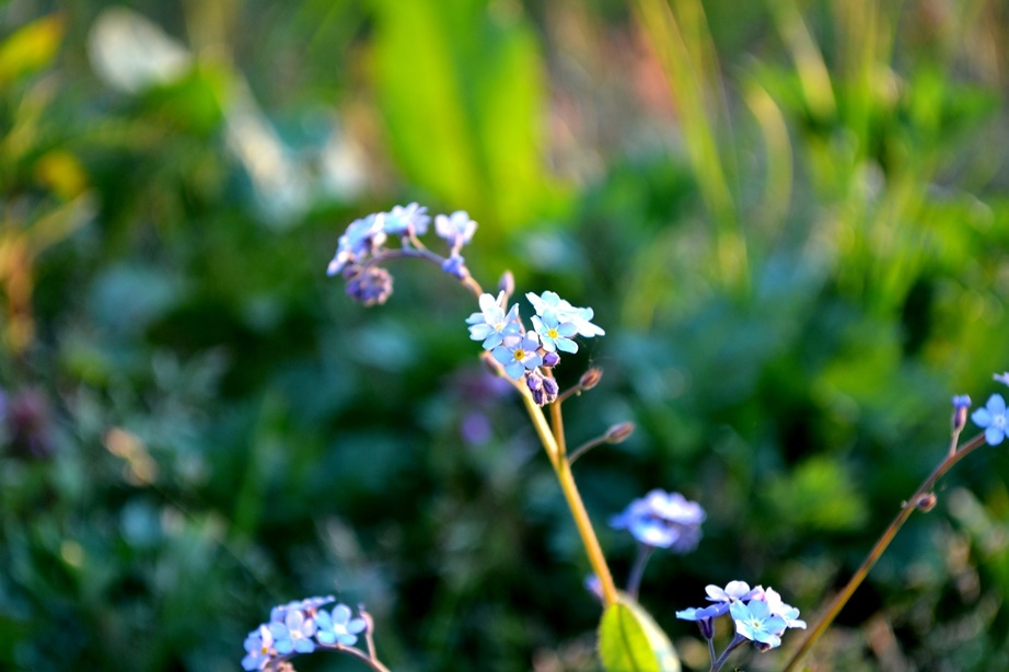 Unforgettable flowers. Beauty in simplicity