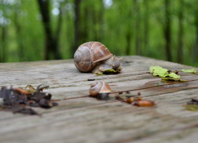 Snacking Snail