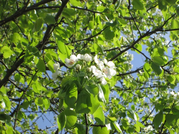 tree green white flower