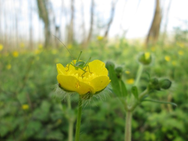 insect yellow flower bug green