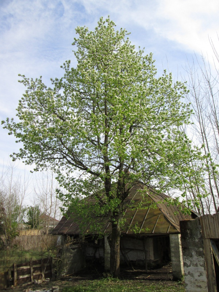 house tree green old village