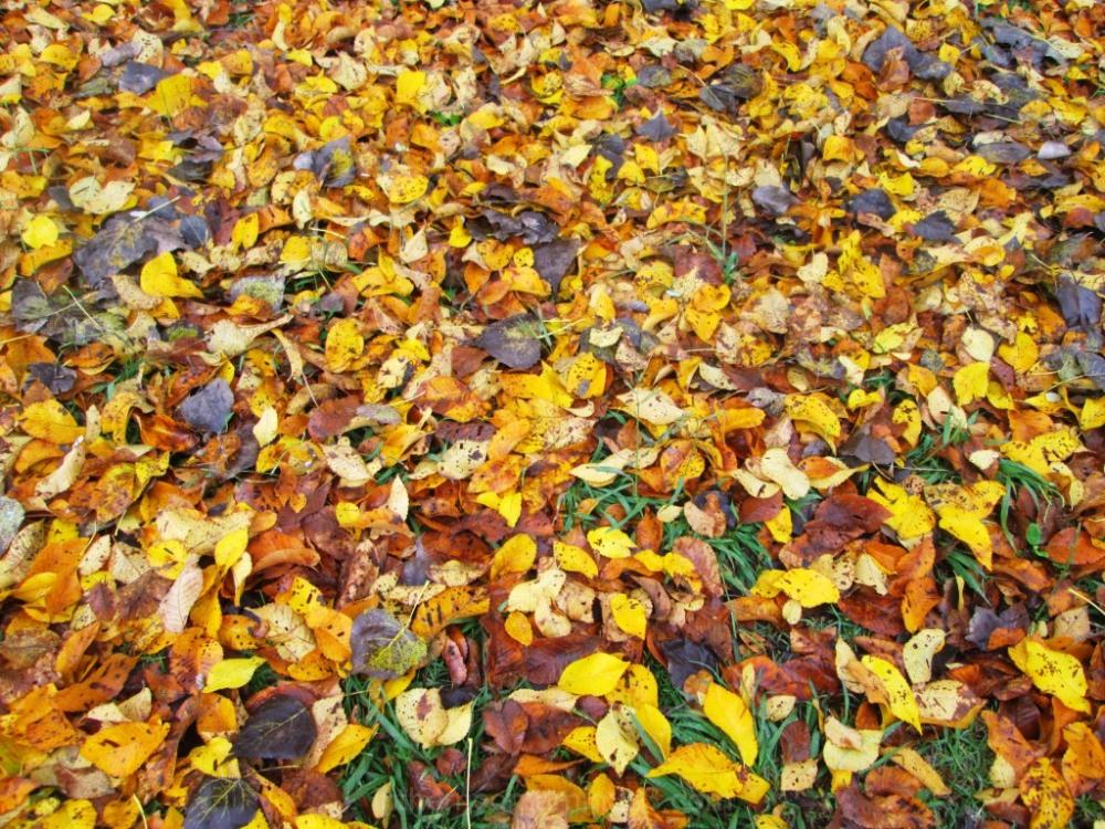 colorful leaves Celebration