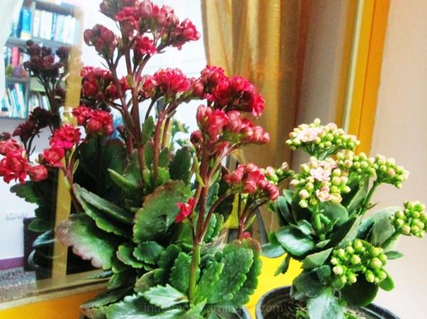 my flower4