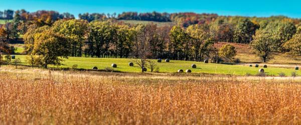 Pastoral Autumn Scene