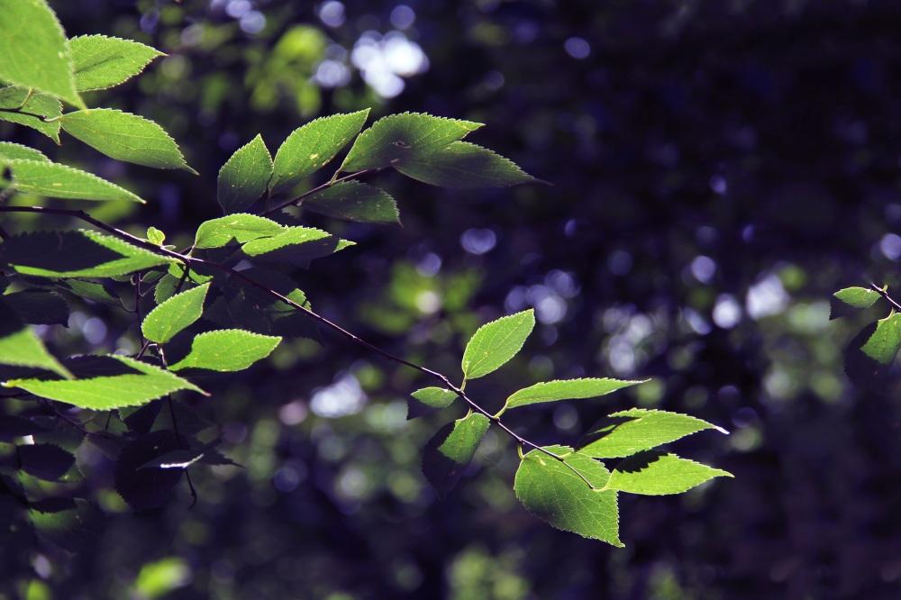 Leaf shine