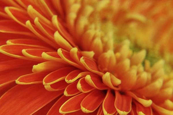orange !