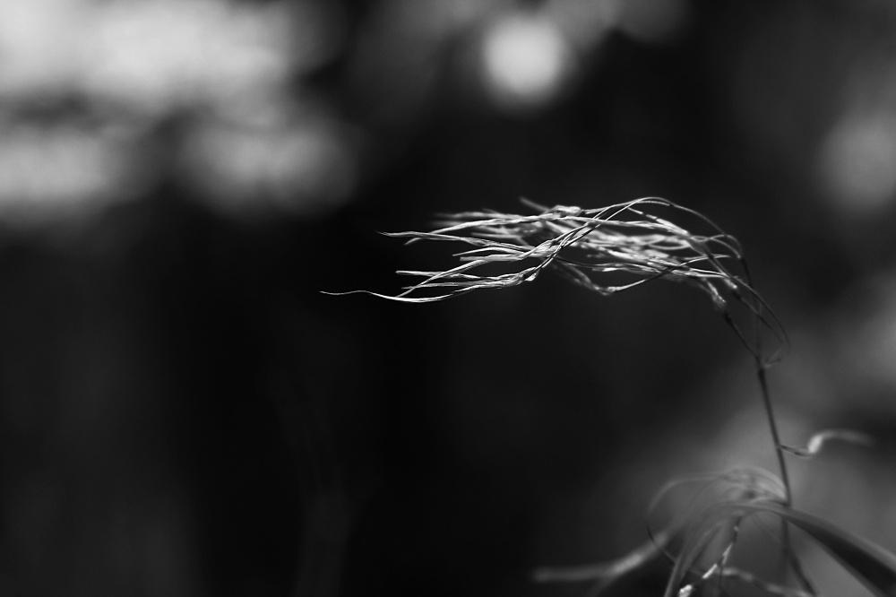 . .. و باد می وزد