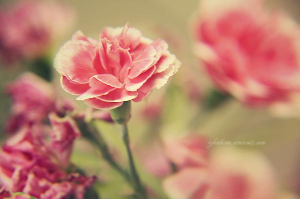 ...به لبخندِ تو میماند.. بهار