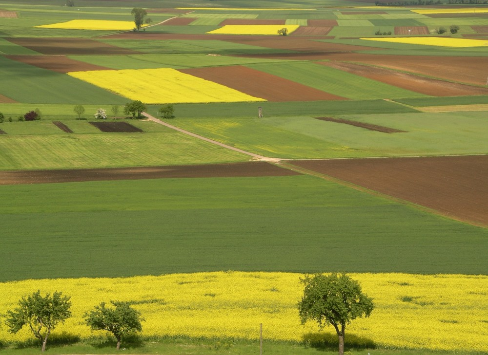 spring fields yellow green bown
