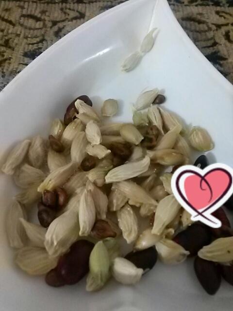 هسته میوه ها