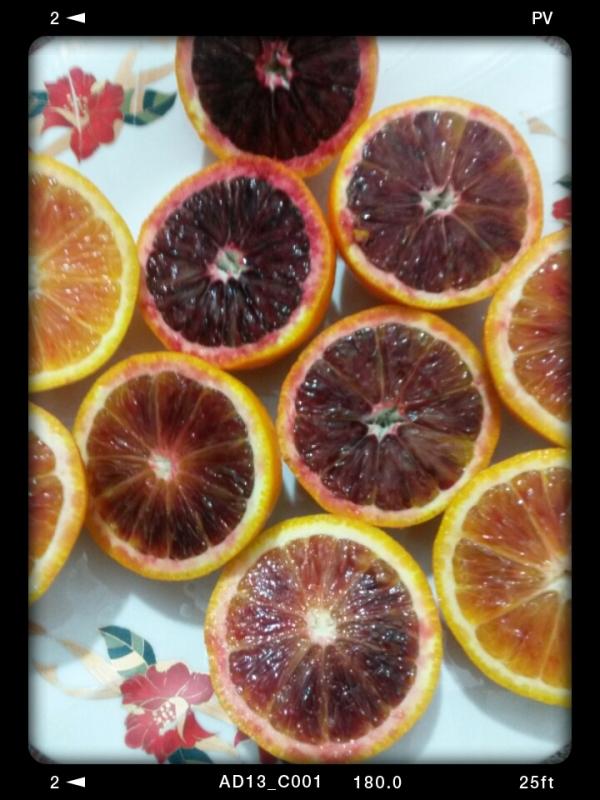 پرتقالهای خونی