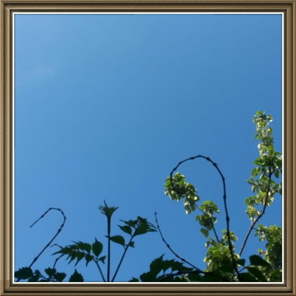A blue sky(yesterday)