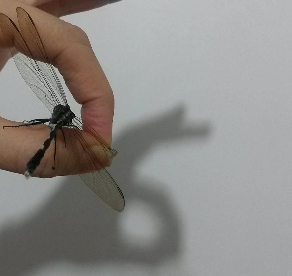 Dragonfly (5)