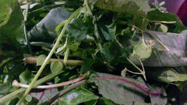 سبزیجات محلی