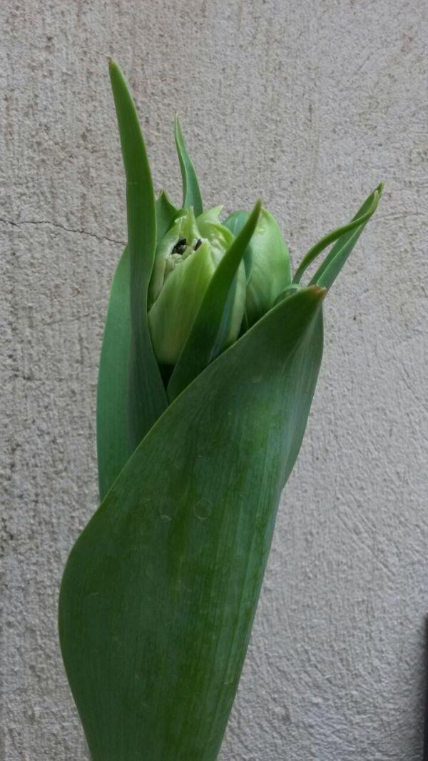 آمد بهار جان ها (7)