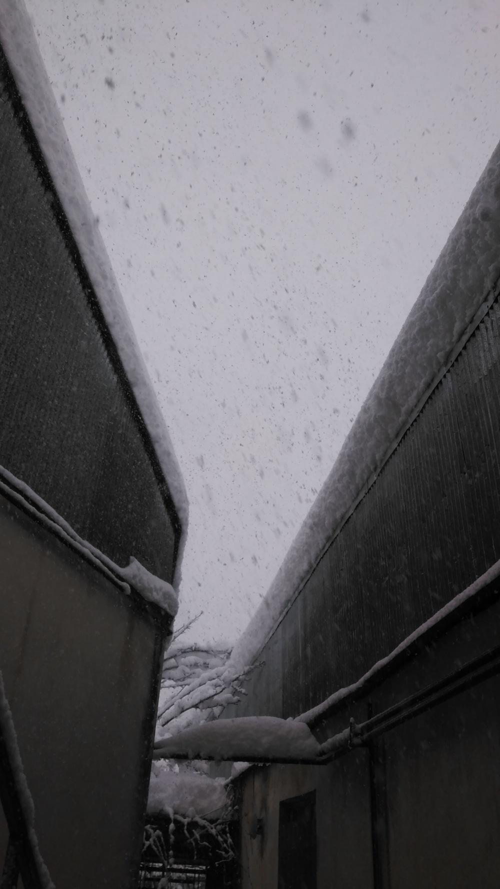 Snow 2020 (2)