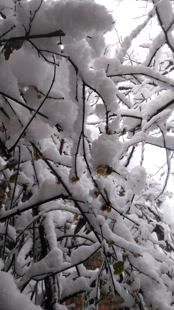 Snow 2020(3)