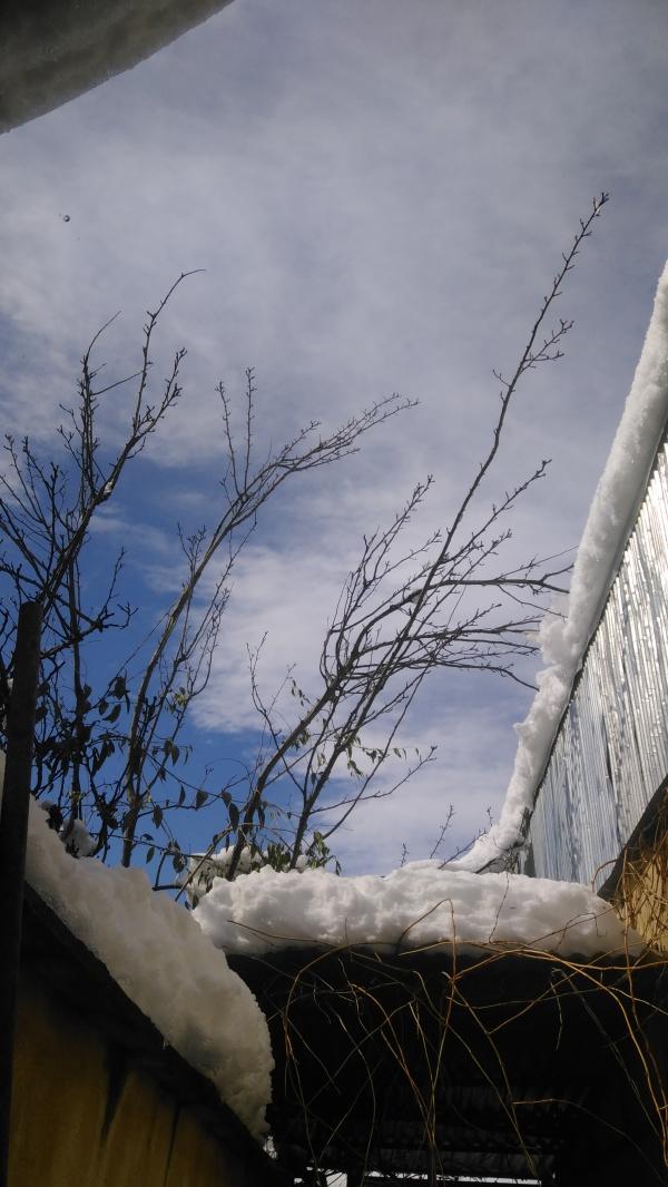 Snow 2020 (4)