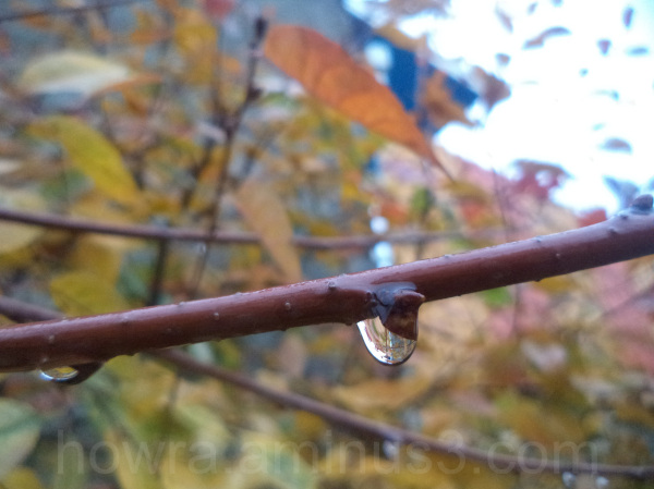 A drop of autumn