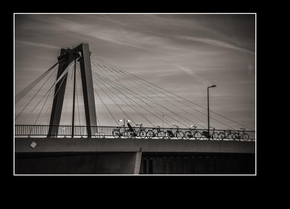 bicycles on a bridge  Rotterdam