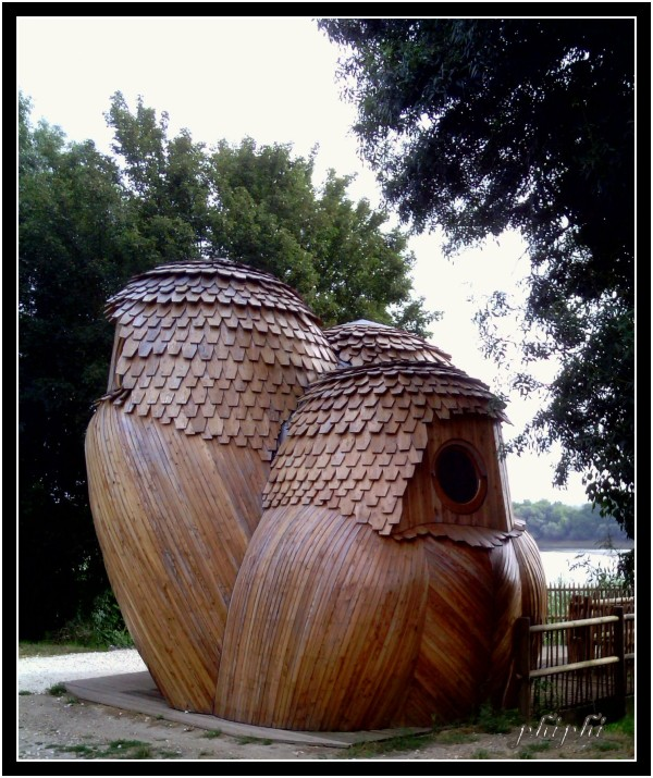 les chouettes du bord de Garonne