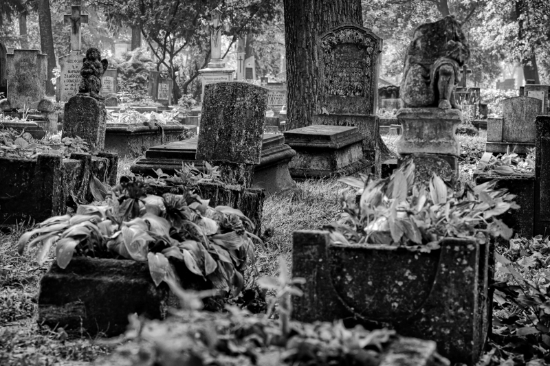 Quarter Of Dead Angels