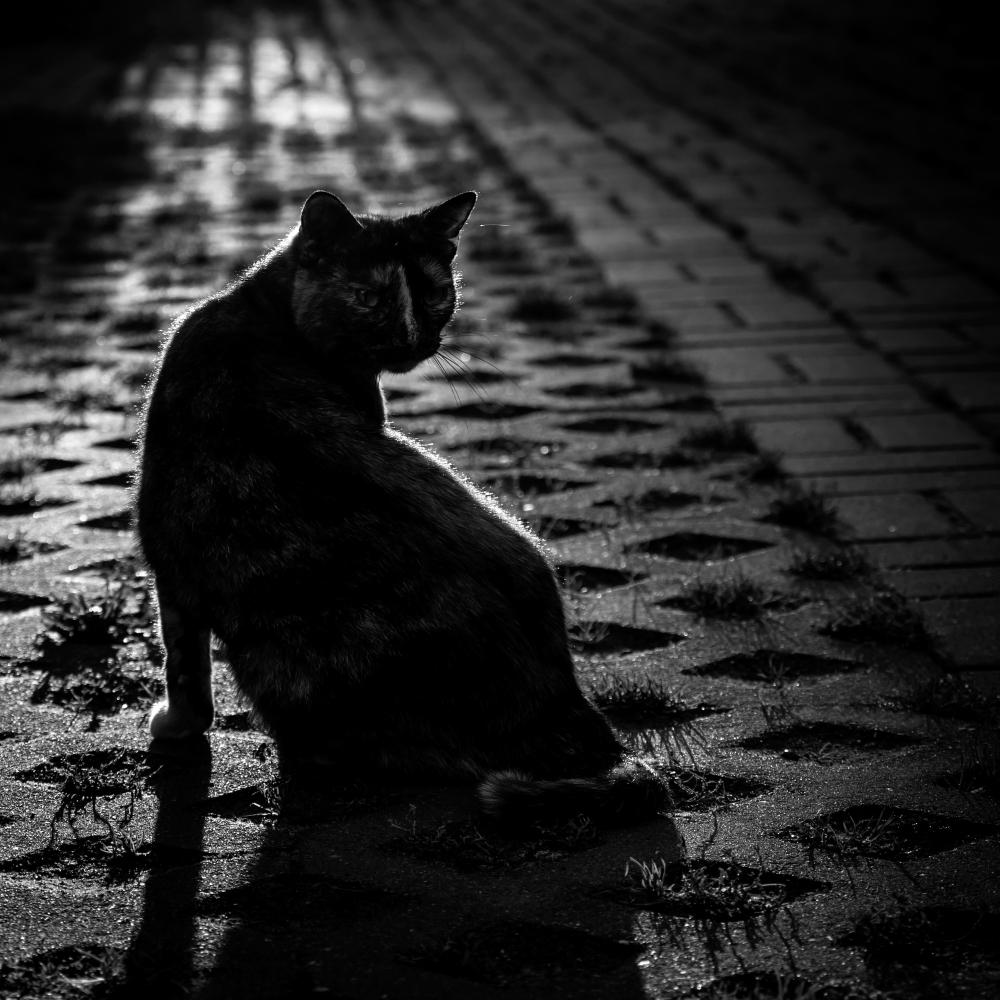 morning, light, cat, dark
