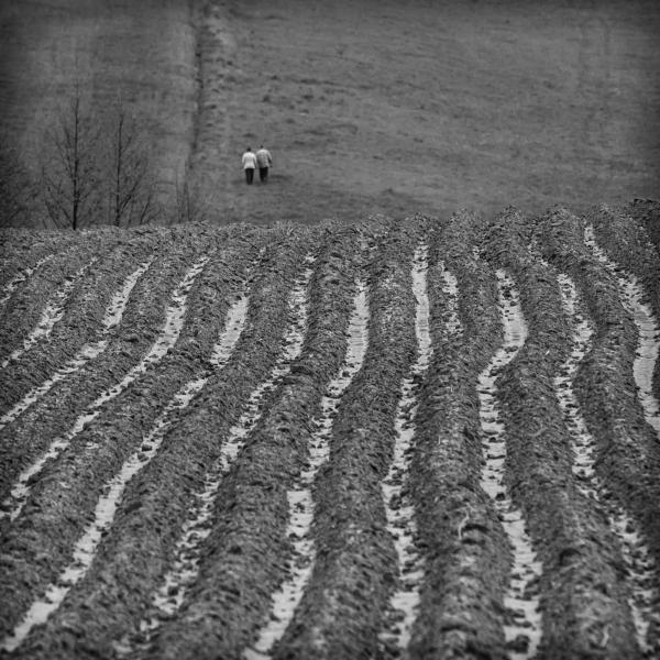 Gray Field Story