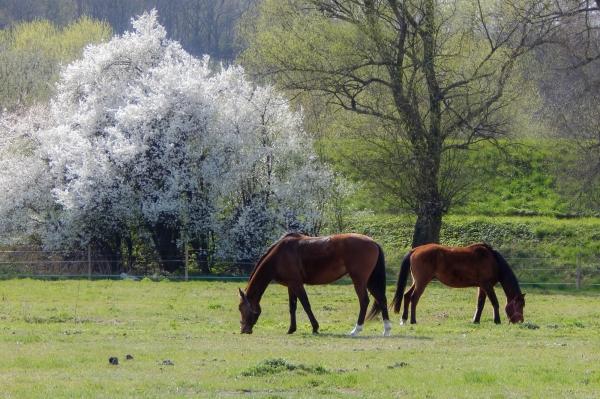 In Grassland