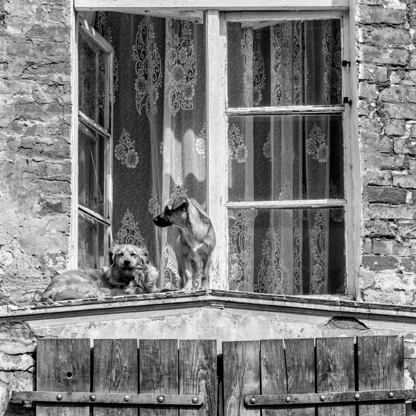 Window Stories