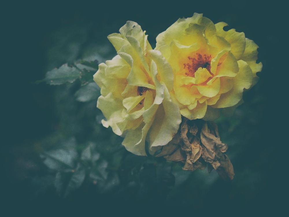 Name Of Rose