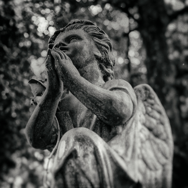 Prayer Of Rose