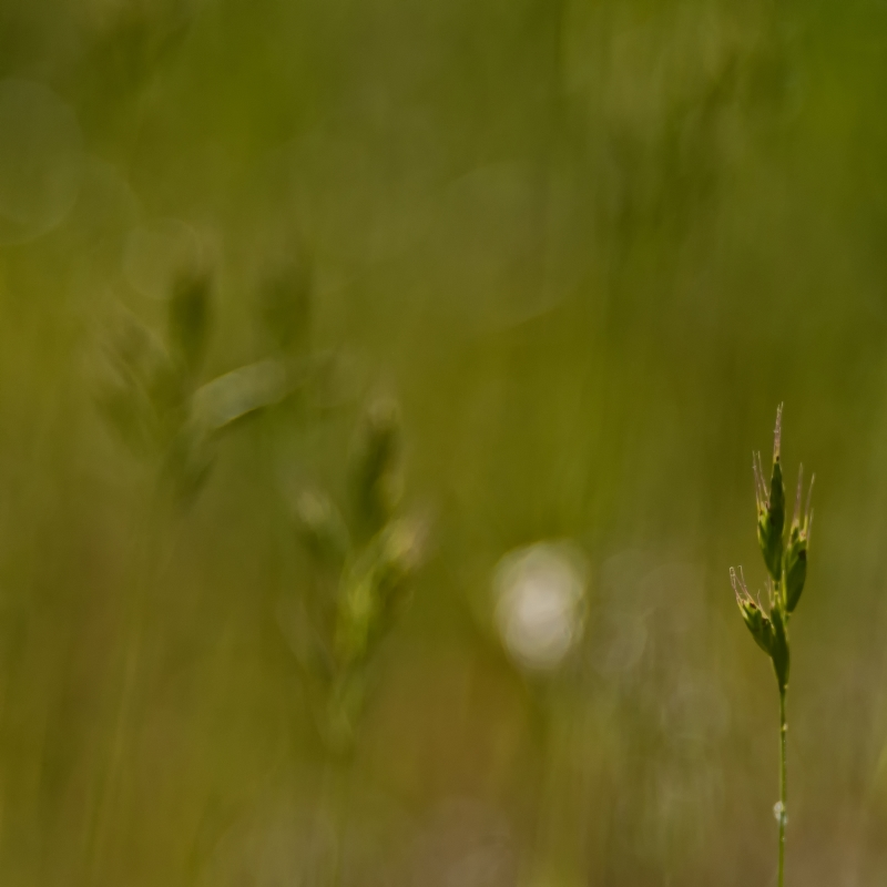 Stories From The Grass III