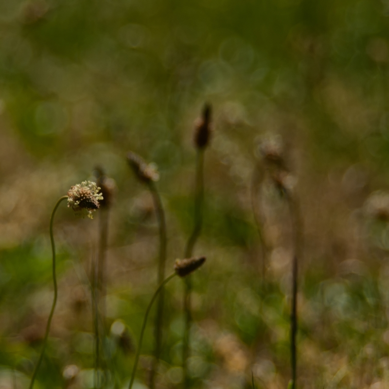 Stories From The Grass IV