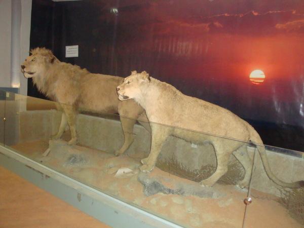 Wildlife Museum.Urmia  .Iran