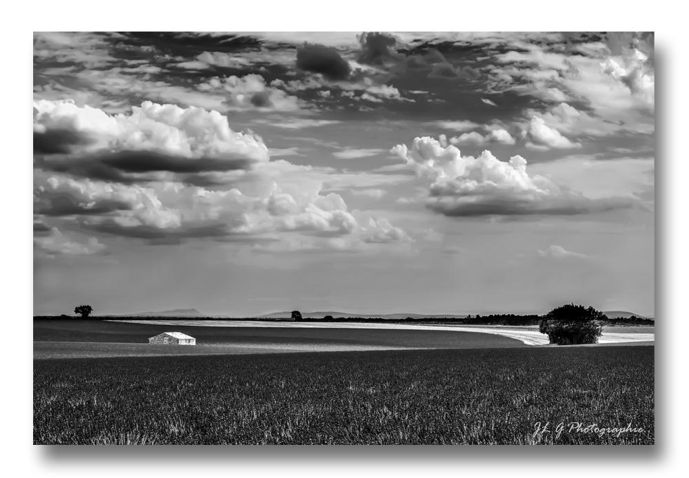 La maison au milieu d'un champ de Lavande ...