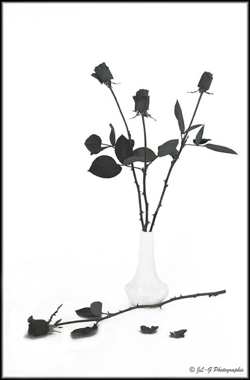 Les Roses ...