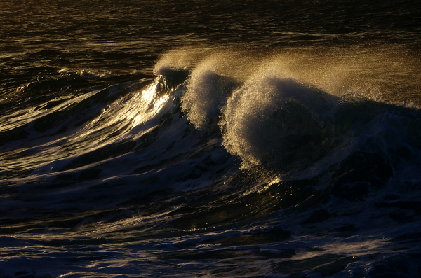 Roaring Wave