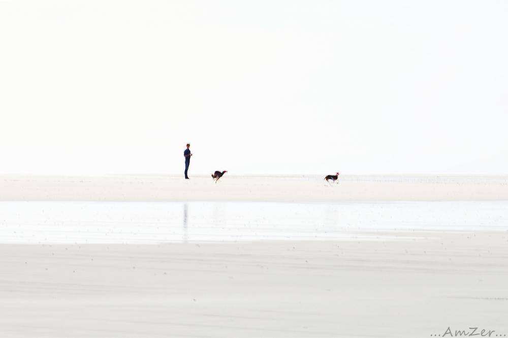 ... Horizon ...