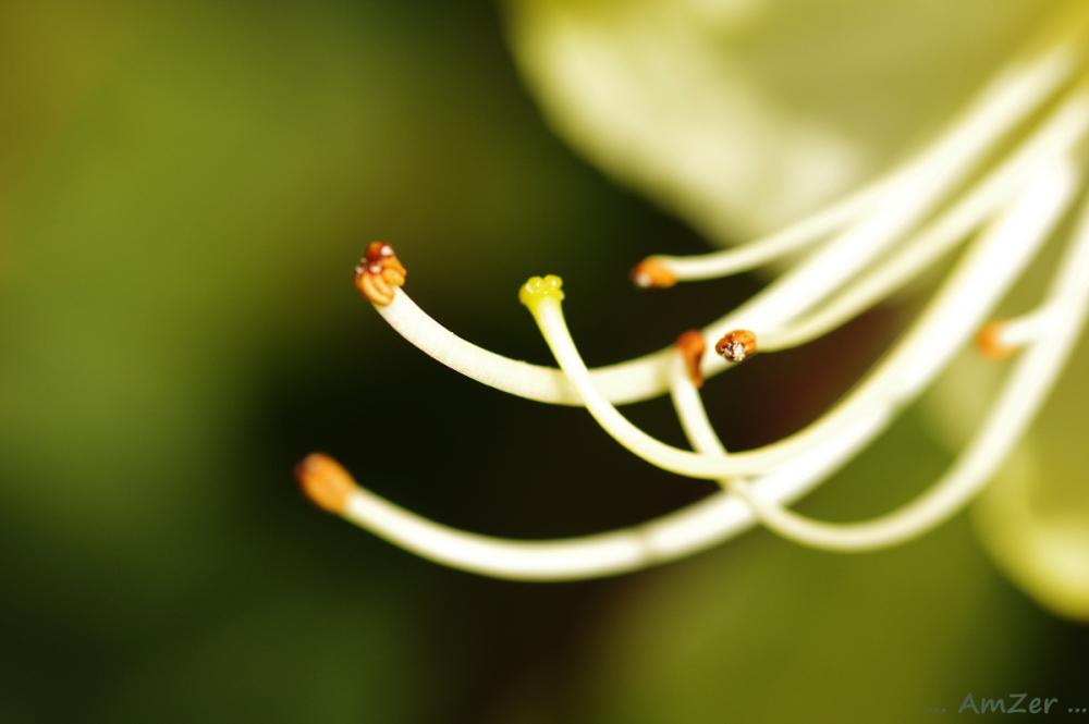 le sexe des fleurs / .