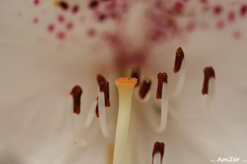 le sexe des fleurs / ..